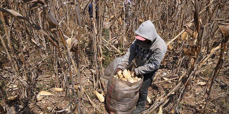 Senado analiza reforma para cerar el Plan Nacional para Prevenir y Erradicar el Trabajo Infantil
