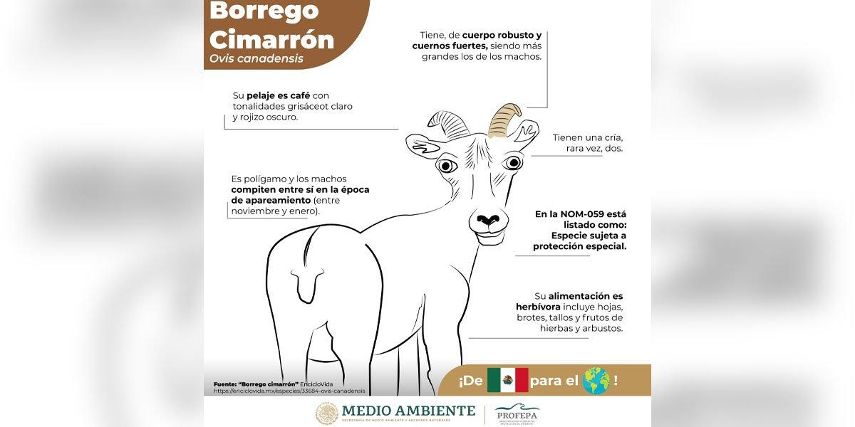 Profepa desata memes y burlas en redes sociales por dibujos de fauna de México