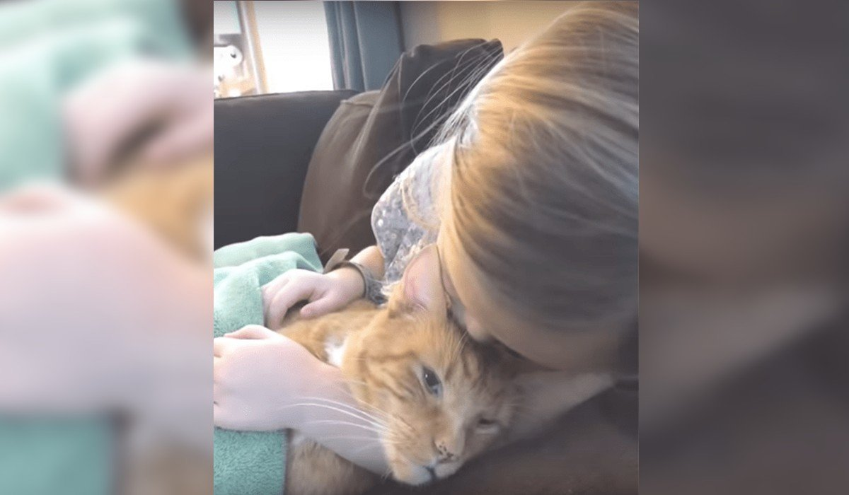 Niña le canta a su gato por última vez antes de morir; así fue la conmovedora despedida
