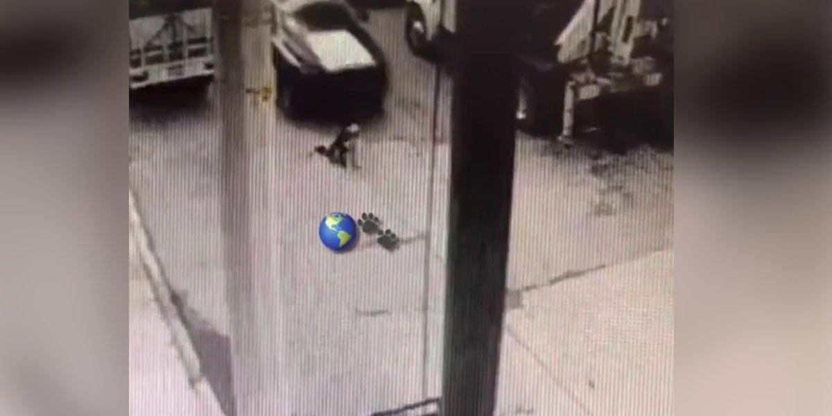 Patrulla de policía municipal arrolla intencionalmente a perrito husky en Edomex