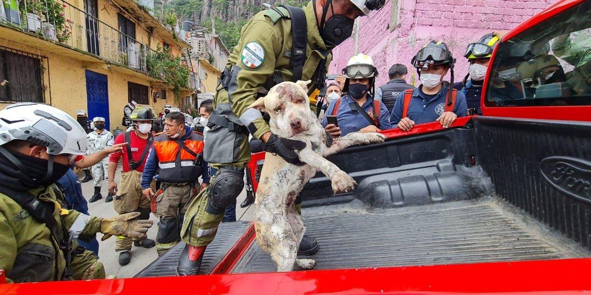 Rescatan un perrito de escombros de desgajamiento del cerro del Chiquihuite