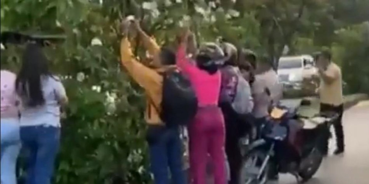 Árbol lleno de billetes sorprende a habitantes de Pance, sur de Cali (Video)