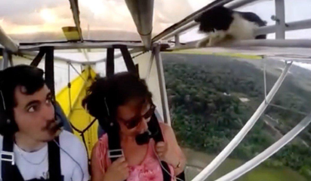 'Gato volador' se vuelve viral; el minino apareció en ala de un avión ultraligero
